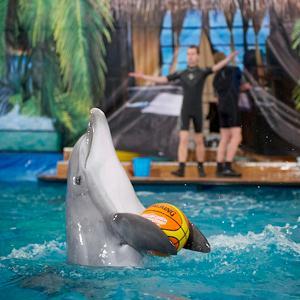 Дельфинарии, океанариумы Таганрога