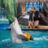 Дельфинарии, океанариумы в Таганроге