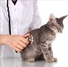 Ветеринарные клиники в Таганроге